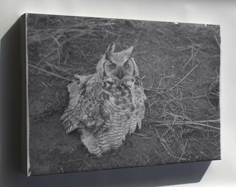 Canvas 16x24; Great Horned Owl Sitting On Ground Nara 283826