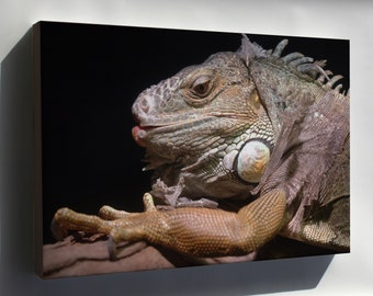 Canvas 16x24; Iguana Melbourne Zoo 20070224 002