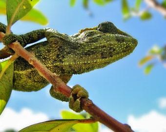 Psycho Gecko Print