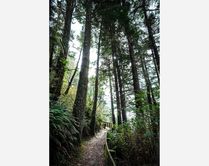 FOREST PATH 1 | modern fine art photography blank note cards custom books interior wall decor affordable pictures –Rick Graves