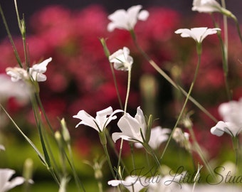White flowers, Nature Photography, Spring Flowers, Garden , Digital Download, Wall Art