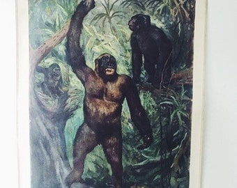Vintage Zoological School Chartof a Gorilla/Educational Pull Down Chart/poster/German School Teaching Chart/Gift for animal lovers