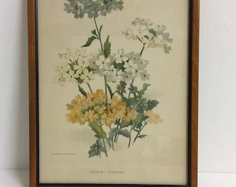 Floral English Litho/ VIntage Floral Wall Art/ Vintage Floral Decor