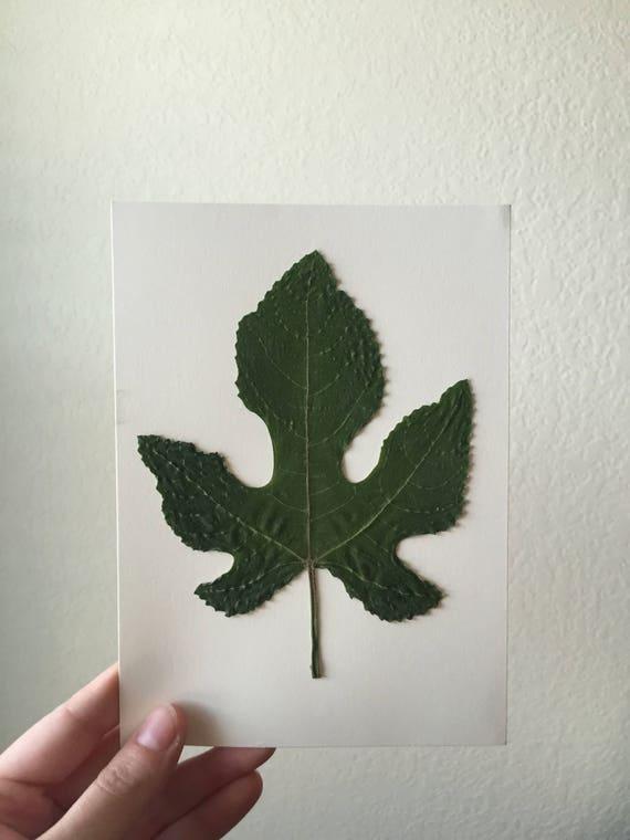 Fig Leaf Herbarium 5x7 -Fruit Tree Botanical -Nature Art - Framed Floral Art-  Pressed Leaf Art- Pressed Flower- Vintage Botanicals- Herbier