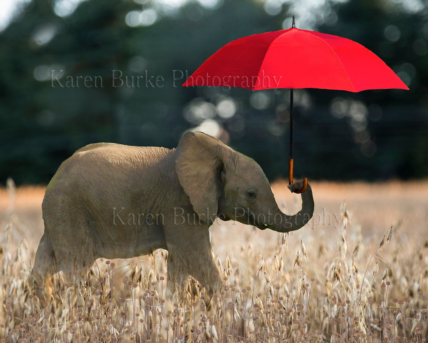 Whimsical Baby Elephant Print Red Umbrella By Abitofwhimsyshop