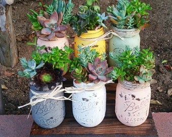 Super cute adorable rustic mason jar succulent arrangement customizable any color ( centerpiece/ wedding/ gift/ showers/ birthdays)