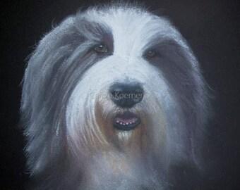Bearded Collie pet pawtrait