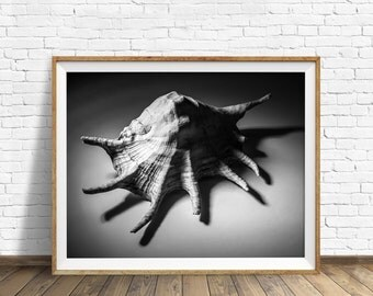 "sea shell wall art, black and white photography, instant download printable art, nautical wall art, printable, modern - ""Shell Number 2"""