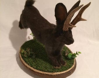 Black taxidermy jackalope baby