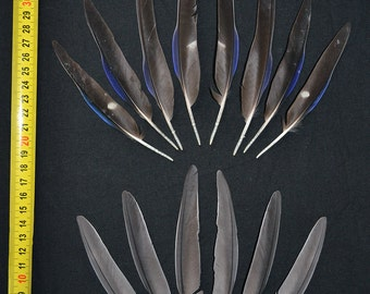 14 pcs blue, grey parrot feathers in pairs