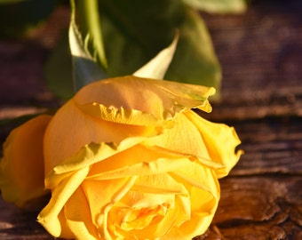 Yellow Rose kissed by the sun - Instant downloadable photo image