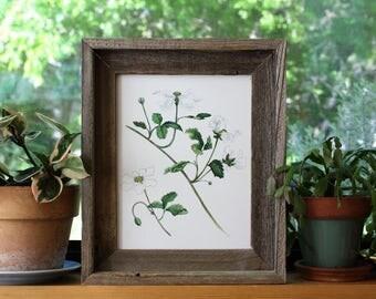 ON SALE Blackberry Art, Blackberry Painting, Blackberry Print, Dewberry, Black berry Watercolor, Vintage Print, Fruit Print, Botanical Art,