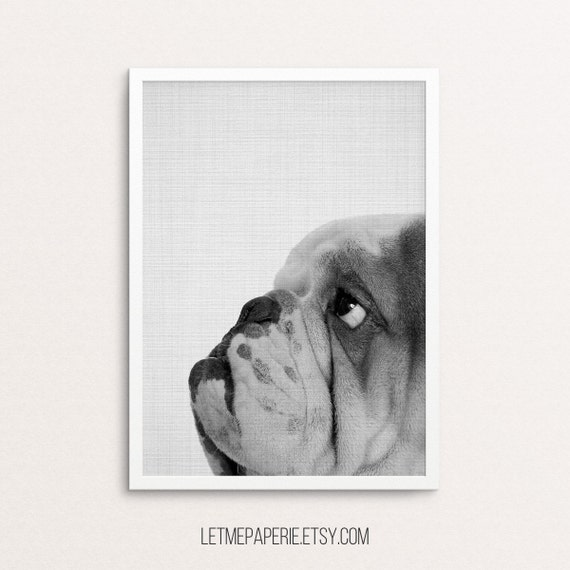 Dog Print, Bulldog photography, Dog Photo, Nursery Animal Print, Black and White Photo, Bulldog Printable, Dog Printable Art, Kids Room art