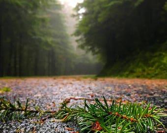 Foggy Redwoods Photo Art | Nature Photography | Mendocino Print | Forest Home Decor | Hiking | California Coastal Redwoods