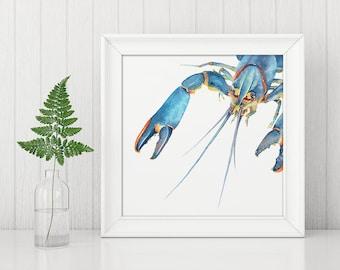 Redclaw crayfish, lobster, yabbie, seafood, Australian wildlife watercolour print