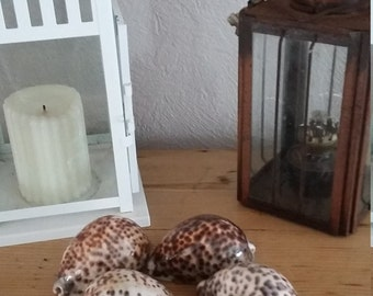 Collection of 5 shells
