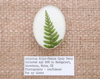 Lady Fern Brooch. Sterling Silver 925 Botanical Brooch with Real Fern Leaf Specimen.