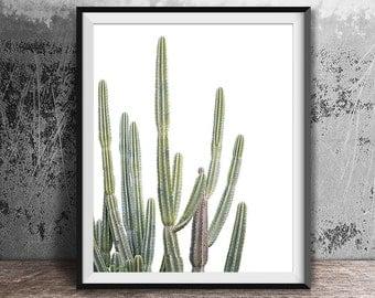 Desert Cactus Art, Succulent Print, Botanical Print, Cactus Art, Cactus Print, Wall Art, Prints, Texas, Cactus, Cactus Photograph, Australia
