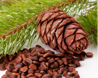 1oz Cedar Bean Fragrance Oil - Fragrance Oil for Skincare, Soap Fragrance, Phthalate Free Fragrance