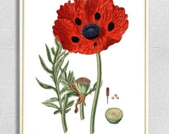 Poppy print botanical illustrations red flowers print vintage antique print wall art print herb art home decor art kitchen decor poster