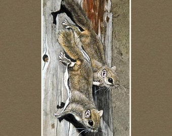 Flying Squirrels - Matted Print