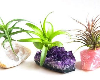 Crystal Air Plant 3 pcs Kit! INCLUDES: 3 Tillandsia Plants, 3 Healing Stones, 1 Adhesive, and 3 Bands