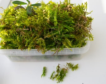 Sphagnum moss, green moss, an additive in soil, natural material, home decor.