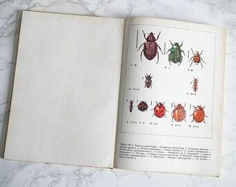 Vintage Illustrated Beetles Book | Vintage Beetles Illustrations | Beetles Illustrations | Zoology book