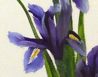 Dutch Iris Study; 8x10; Oil on canvas paper; matted 11x14