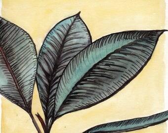 Aquarelle Caoutchouc plante verte d'intérieur