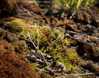 Mossy Ground - Photo Print - Free Shipping