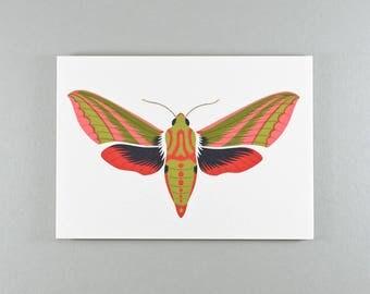 Blank Greeting Card | Pink & Green | Elephant Hawk-Moth | Single card and envelope