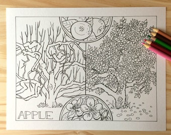 Apple Tree Printable Coloring Page