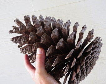 "8-9"" Jumbo Pine Cone, Large Pine Cone, Jumbo Pinecone, Large Pinecone, Huge Pine Cone, Huge Pinecone, Pine Cone Craft, Pine Cone Decoration"