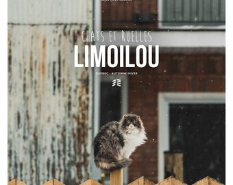 Photographic collection, cats and alleys, Limoilou (winter)