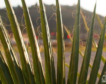Hidden Behind The Palm Print
