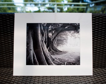 "Nature Photography, 16x20"" matted print, wall art, matted photo, 11x14 print"