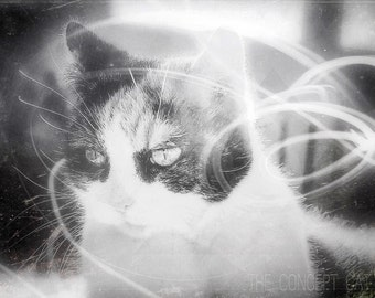 Cat art photography, Calico cat, original photo print, cat lover gift, retro sci-fi vintage, black and white, photo printing