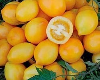 Lemon tomato - plum lemon-10 seeds/seeds-Zitronen Tomate-