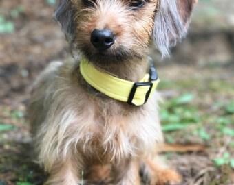 Yellow Dog Collar - Boy Dog Collar - Summer Dog Collar - Personalized Dog Collar - Dog Collar for Girls - Dog Collar for Large Dogs