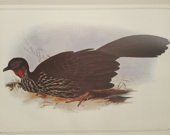 Vintage Print, Crested Guan, Edward Lear, 1800s