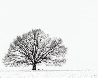 "FineArt print ""simplicity in winter IV"""