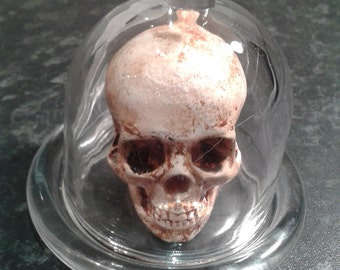 Apothecary jar containing a shrunken human skull  replica,Vintage Medical/Lab/Science/Apothecary Specimen
