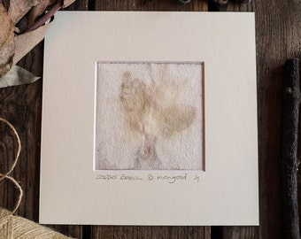 Original Eco Printed Art, ready to frame, 8 x 8 inches. Handmade with Copper Beech leaves and Marigold petals. OOAK
