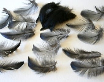 """Chicken feathers - Cruelty free - Natural - Bird feathers - New Jersey Giant rooster - 3""""-3,5"""" - qty 25"""