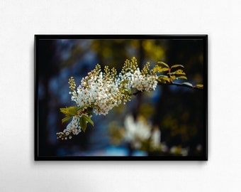 Spring, bloomy tree, Photo, Photoprint, Art, Printart - Poster, Acrylic, PVC foamboard, canvas print