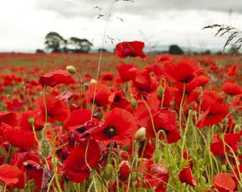 Flanders Field Poppies-Flower Seeds-Organic Seeds-NON-GMO-Vegetable Seeds
