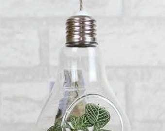 Hanging Vase, Air Plant Glass Terrarium Hanging Terrarium, Light Bulb Shaped Succulent/Crystal/Energy Unique Urban Garden Home Decor