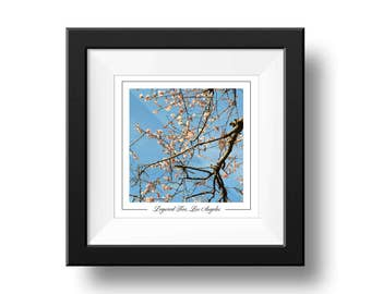 Dogwood Tree Print, Square Wall Art
