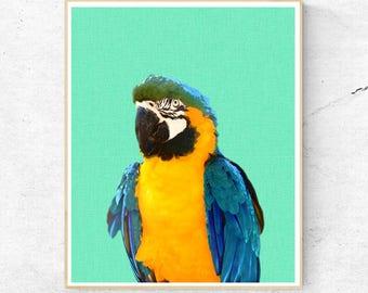 Exotic Bird Print, Tropical Parrot Wall Art, Macaw, Mint Toucan, Tropical Decor, Contemporary Bird Photography, Printable Digital Download